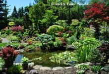pond__garden_1
